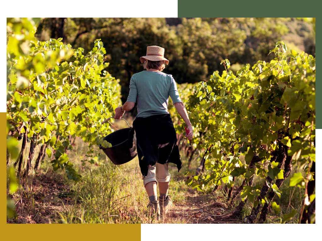 Biologische wijnmaker Le Mazelet