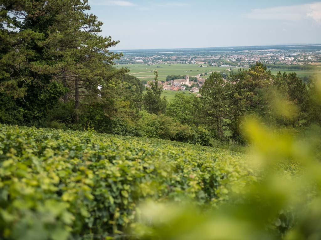 Deveney Mars Puligny-Montrachet Bourgogne France