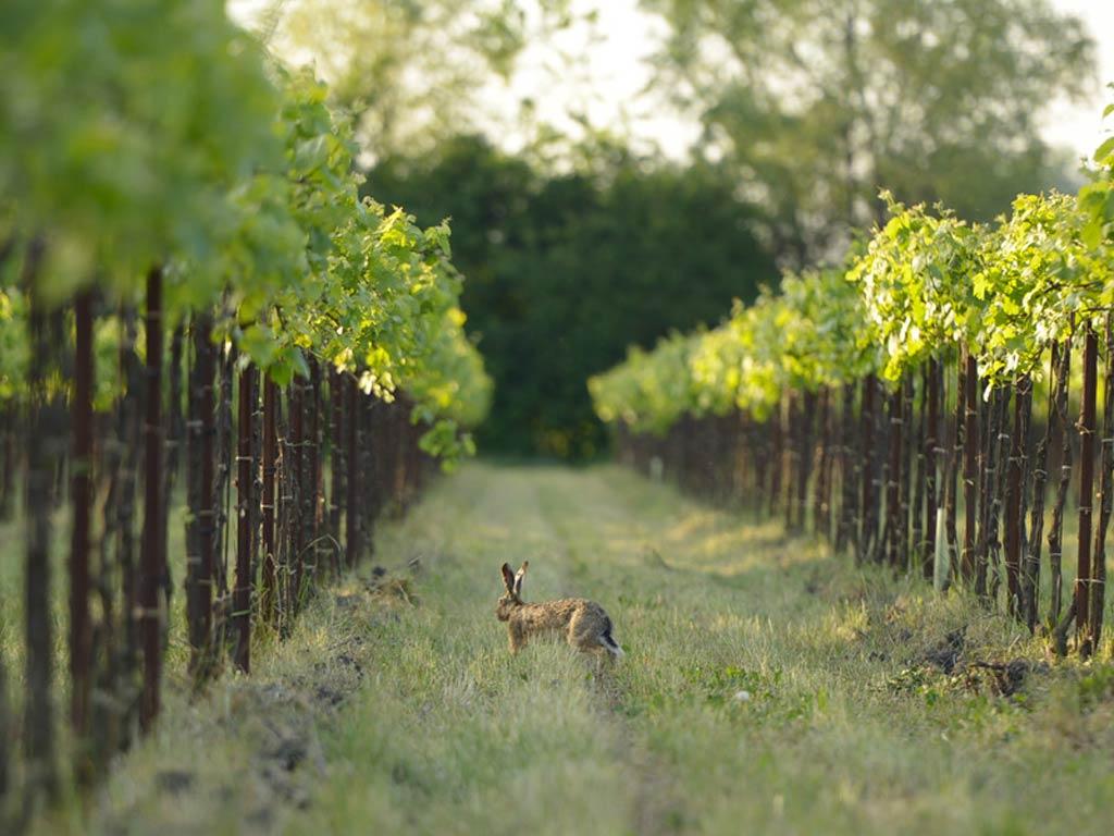 Fidora Wild Nature Vineyards Pinot Grigio DOC Venezia