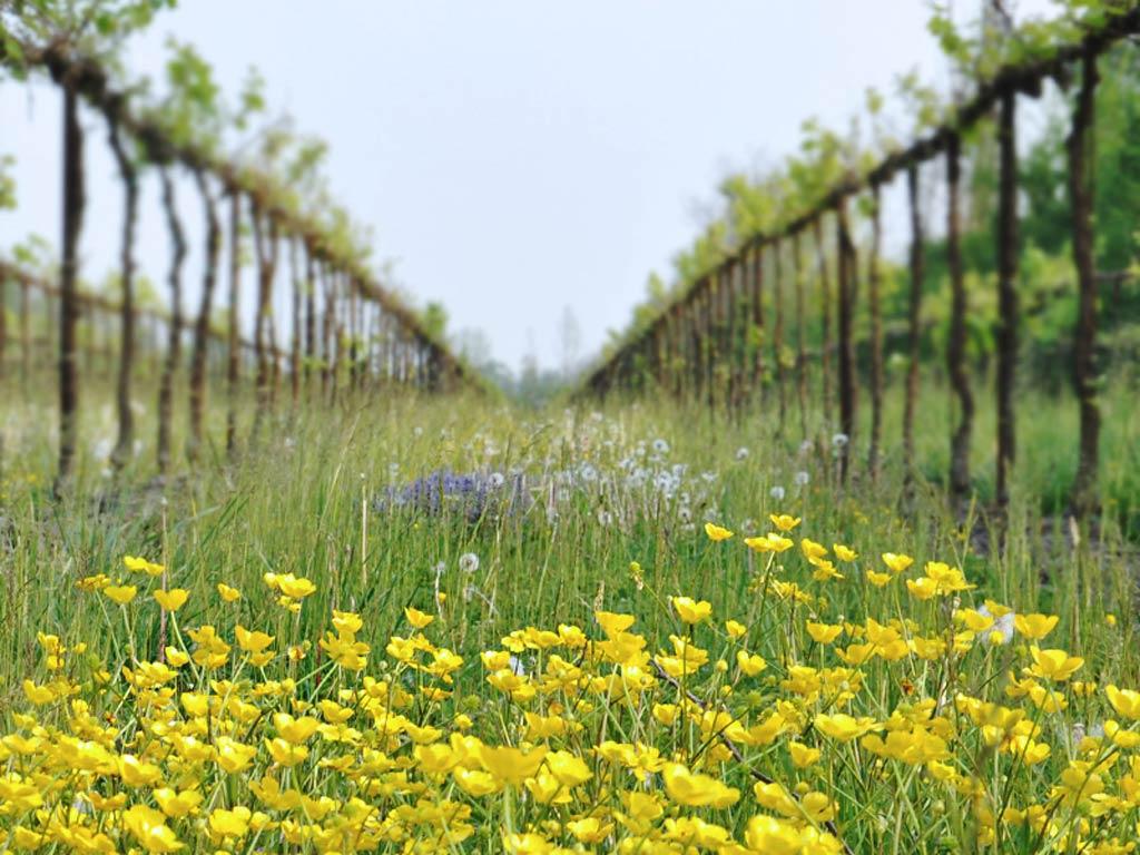 Fidora Wild Nature Vineyards