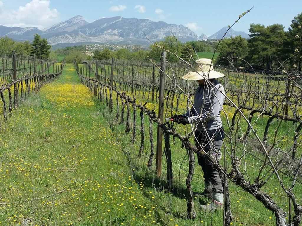 Wijnmaker Sauvella Orca Spain natuurwijn biologische wijn natural wines