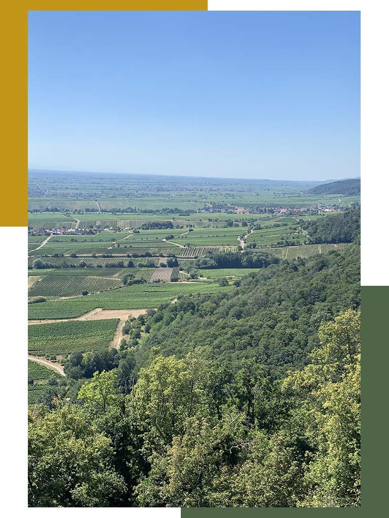 duttweiler pfalz deutschland wijnkoperij van paesen biologische wijnen
