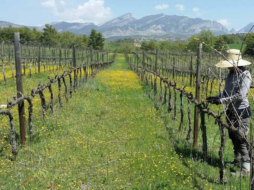 biologische wijnbouw