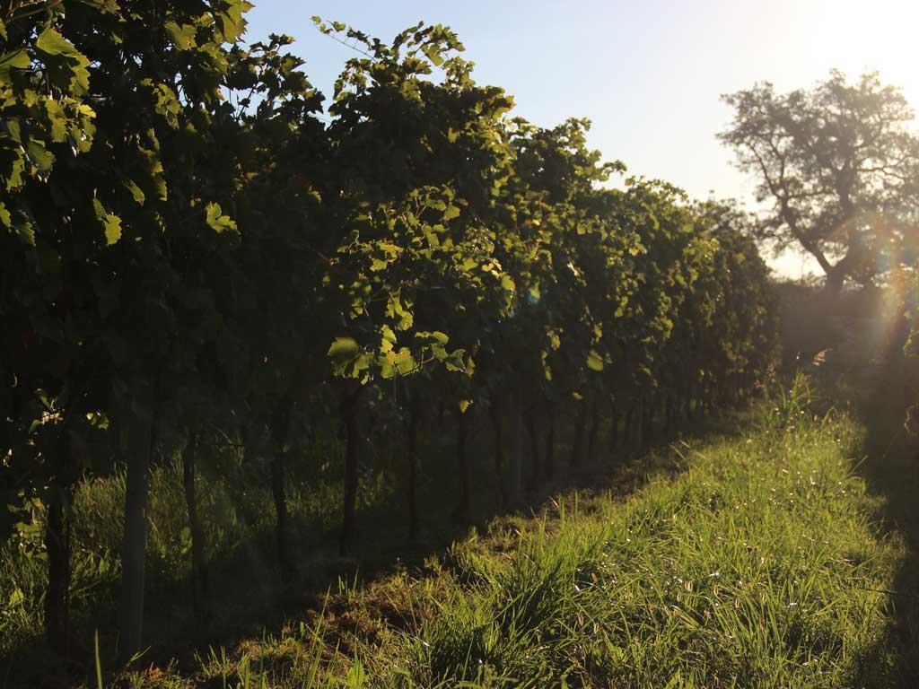 vegan wijnbouw